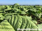A Trip to the Farm with General Cigar 2017